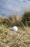 Golfball in Dünen 3 stockfotografie