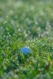 Golfball in den Gräsern mit Tau-Tropfen des Morgens Stockbilder