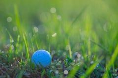 Golfball in den Gräsern mit Tau-Tropfen des Morgens Stockbild