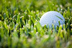 Golfball, der im grünen Gras liegt stockfoto