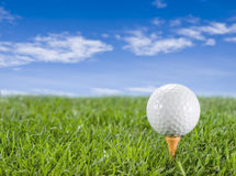 Golfball on the grass. Golf ball in the grass on the tee Stock Images
