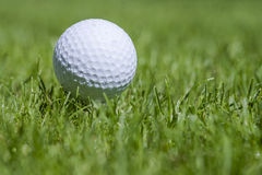 Golfball on grass Royalty Free Stock Photography