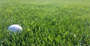 Golfball im grünen Gras Stockbilder
