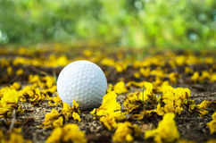 Golfball with yellow flower. Close up of golf ball with yellow flower Stock Images