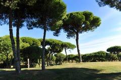Golfbana för El Rompido, Andalusia, Spanien Arkivbild