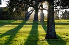Golfbana i Auckland, Nya Zeeland arkivbild