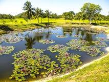 Golfbana och lake Arkivbild