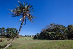 Golfbana Selborne royaltyfri bild