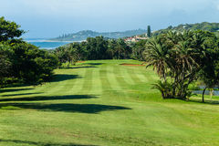 Golfbanamedeltal fyra Arkivbild