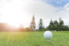 Golfbegrepp: Golfboll på golfbanan, en golfballset upp för fotografering för bildbyråer