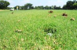 Golfboll i hålet för spridarehuvud Arkivbilder