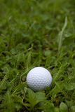 Golfboll i land Royaltyfri Fotografi