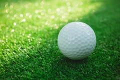 Golfboll med puttern på grön kurs Selektivt fokusera Royaltyfria Foton