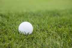 Golfboll på detaljsikt för grönt gräs Royaltyfri Foto