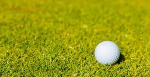 Golfboll på en farledgräsplan på en golfbana arkivbilder