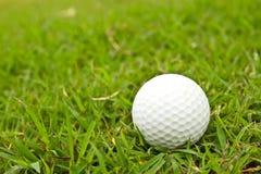 Golfboll på gräs. Arkivfoton