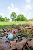 Golfboll på torra sidor royaltyfria bilder