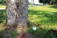 Golfboll på trädbotten Arkivbild