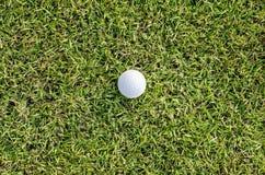 Golfboll på gräsplanen Arkivbild