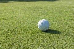 Golfbollen jagar på Arkivfoton