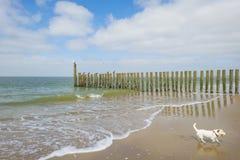 Golfbreker op een recreatief strand in de lente die land beschermen tegen overzees stock afbeelding