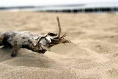 Golfbreker van het de takzand van strandpolen ustronie de houten Stock Afbeelding