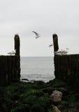 Golfbrekers met zeemeeuwen op de kustlijn van de Noordzee Stock Foto's