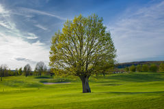 Golfcourse Στοκ εικόνες με δικαίωμα ελεύθερης χρήσης