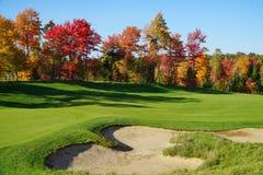 Golfcursus met esdoornbomen stock afbeeldingen