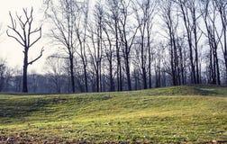 Golfdomstol i den Monza parken Fotografering för Bildbyråer