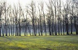 Golfdomstol i den Monza parken Arkivbild
