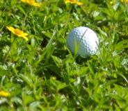 golfegg Royaltyfri Fotografi