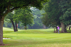 Golfer chipping onto the green Royalty Free Stock Image
