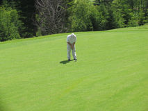 Golfer concentrated. On the green: a golfer Stock Image