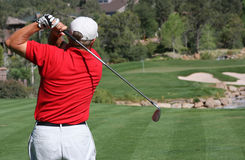 Golfer hitting ball on green. Male golfer with red shirt successfully hitting ball on green with ball and flag visible, focus on golfer Stock Photos
