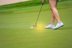 Golfer pushing golf to hole at golf course. Golfer pushing golf to hole on green  grass at golf course in competition Royalty Free Stock Image