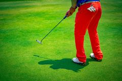 Golfer playing putting golf ball on golf course stock images