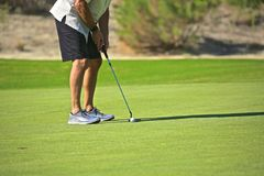 Golfer putter. Golfer sets up for a putt on the green of the golf Stock Image