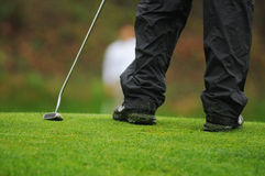 Golfer putting. Golfer with putter and grass clippings Royalty Free Stock Photos
