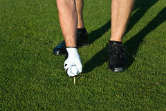 Golfer putting the ball on a tee Stock Image