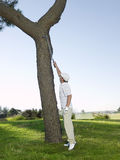 Golfer Retrieving Ball From Tree Stock Photography