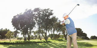 Golfer swinging on the grass Royalty Free Stock Image