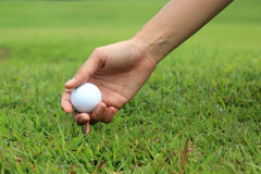 Golfer teeing Royalty Free Stock Images