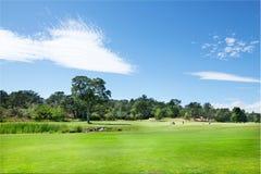 Golfers  Stock Photo