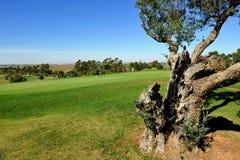 Golfers in the Golf course of El Rompido, Huelva, Spain Royalty Free Stock Image