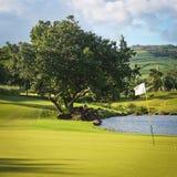Golffält Arkivbild
