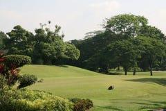 Golffeld Lizenzfreie Stockfotos