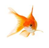 Golffische Lizenzfreie Stockfotos