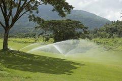 golfgräsplaner Arkivfoton
