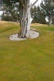 Golfgrün mit Wacholderbusch lizenzfreie stockbilder